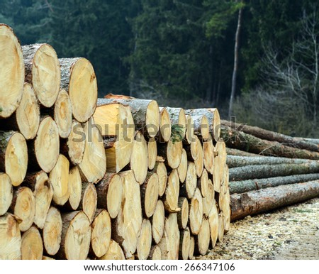Pile of wood logs ready for winter - stock photo