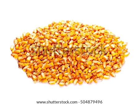 pile organic corn grain isolated on white background
