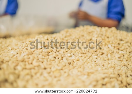 Piles of cashew nuts being packaged by female factory workers - stock photo