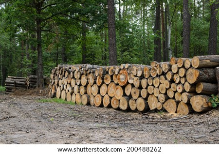 piles of timber along road in forest - stock photo - stock photo