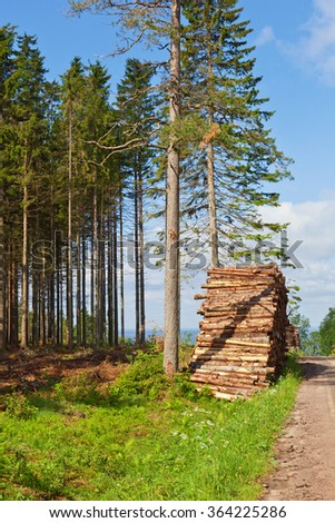 Piles of timber along the forest road - stock photo
