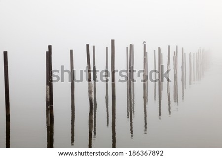 Pilings and Seagull in Deep Fog - stock photo