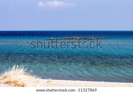 Pilings from an old sawmill dock still stand above the cold blue green waters of Sleeping Bear Bay on Lake Michigan