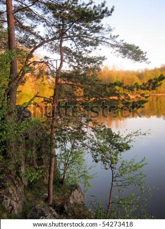 Pine at lake shore - stock photo