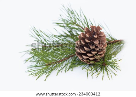 Pine branch with cone on a white background for Christmas decorations - stock photo