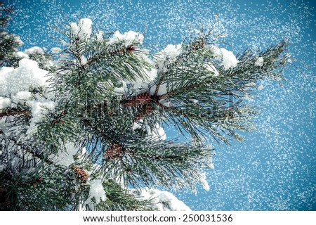 pine branch with cone with falling snow - stock photo