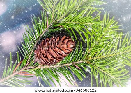 Pine branch with cone with falling snow.  Can be used as background