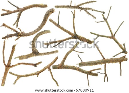 Pine branches without needles set isolated on white - stock photo