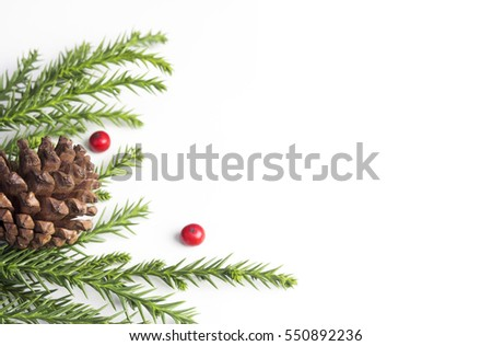 Pine cone and leaves on white background