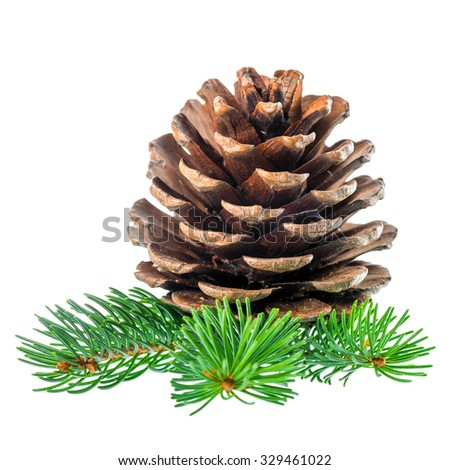 pine cone and needles is isolated on white background, closeup   - stock photo