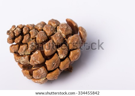 Pine cone background texture detail on white