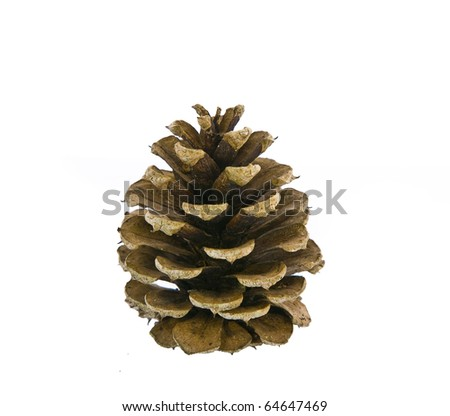 Pine cone isolated on white - stock photo
