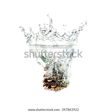 Pine cone splash on water, isolated on white background. Use for extract advertising.  - stock photo