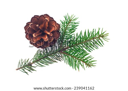 Pine cone with branch isolated on white background - stock photo