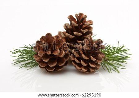 Pine Cones and Needles - stock photo