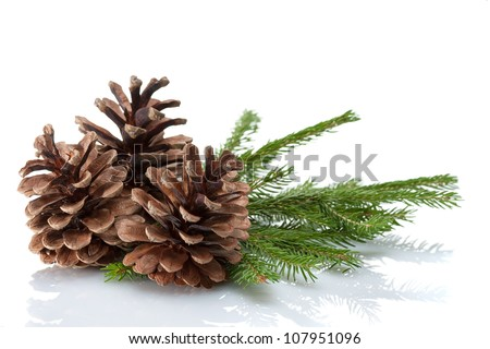 Pine cones and needles, close up - stock photo