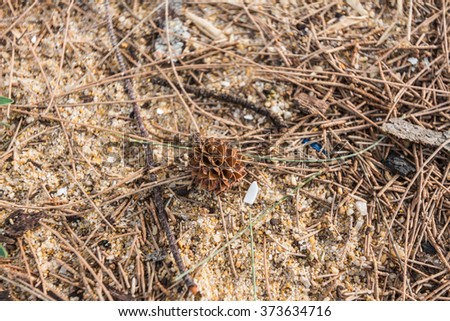 Pine cones falling on the floor - stock photo