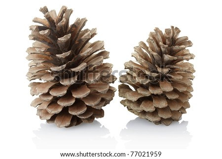 Pine cones isolated on white background, clipping path included - stock photo