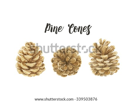 Pine cones  isolated on white  background. Watercolor illustration - stock photo