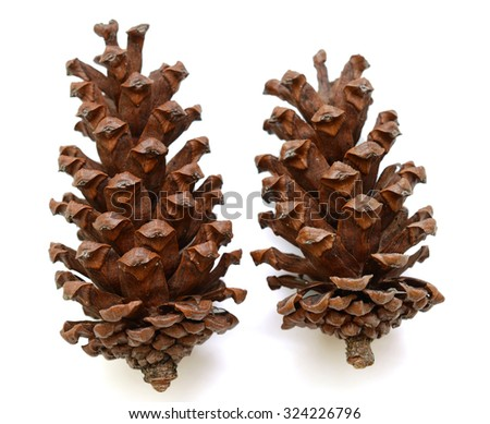 Pine cones isolated on white, clipping path included - stock photo