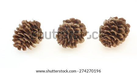 Pine cones of larches - stock photo