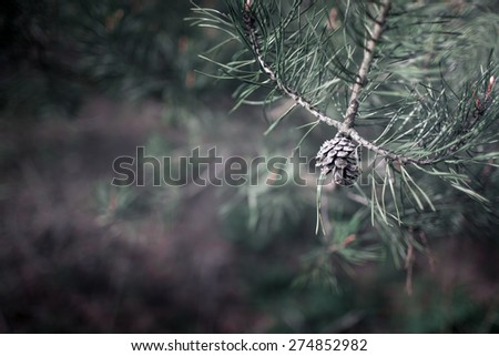 pine cones on a background of green needles - stock photo