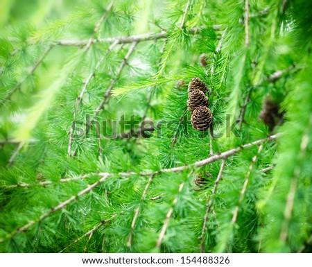 Pine cones on beautiful Christmas tree - stock photo