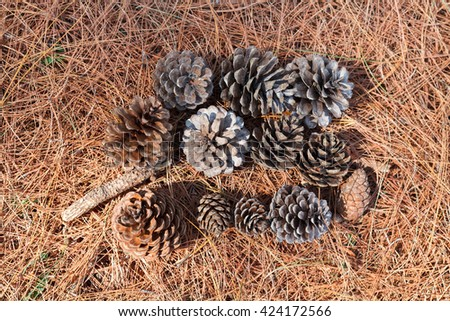 pine cones on the ground. top view - stock photo