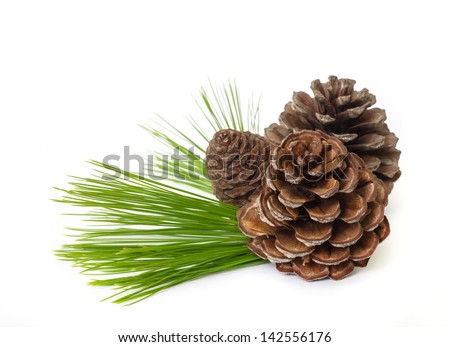 Pine cones with  branches isolated on white background. - stock photo