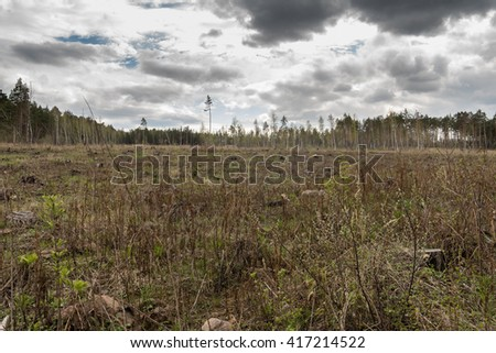 Pine forest being cut down turning into dry lifeless field - stock photo