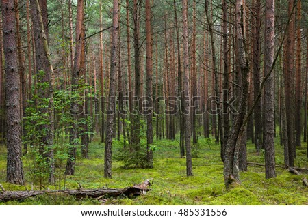 Pine forest in summer. Fallen tree lying on green moss, view inside of the forest.