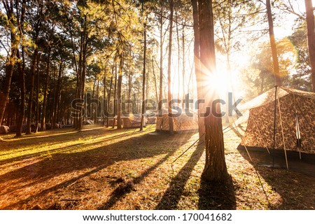 Pine forest in sunrise, Phu Hinrongklar, Northern of Thailand - stock photo