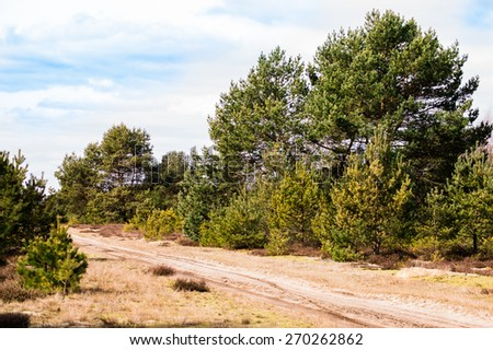 Pine forest landscape in spring with rural road - stock photo