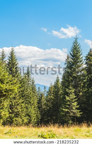 Pine forest mountain landscape