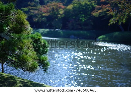https://thumb9.shutterstock.com/display_pic_with_logo/167494286/748600465/stock-photo-pine-in-a-japanese-garden-in-autumn-748600465.jpg