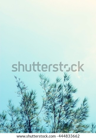 pine leaves on sky background, retro tone