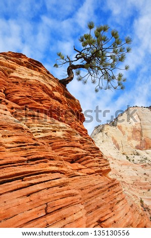 Pine (Pinyon) Tree Growing atop a Sandstone Formation in Zion National Park - stock photo