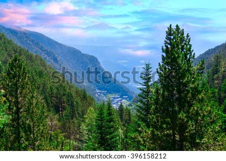 Pine, spruce in an alpine meadow against mountain peaks. - stock photo
