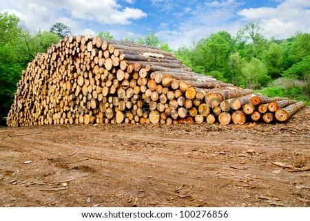 Pine timber stacked at lumber yard - stock photo