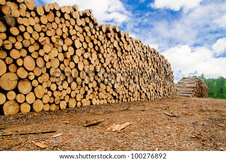 Pine timber stacked at lumber yard - stock photo