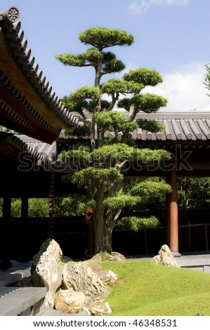 Pine Tree and stone decoration in a Chinese garden, Chi Lin Nunnery,Hong Kong - stock photo