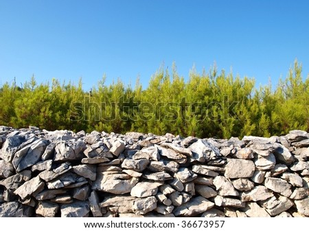 Pine tree behind stone wall - stock photo