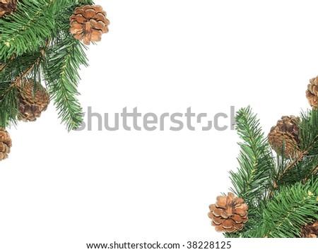 Pine tree border - stock photo