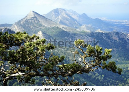 Pine tree branch and mountin in North Cyprus                                 - stock photo