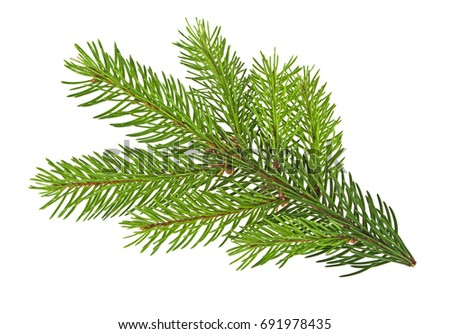 How to Prune White Pine Trees How to Prune White Pine Trees new photo