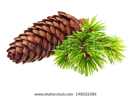 Pine tree branch with cone isolated on white. - stock photo