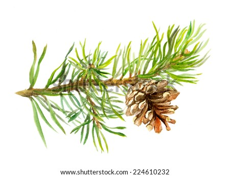 Pine tree branch with cone. Watercolor - stock photo