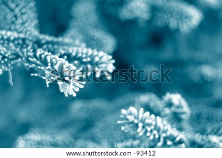 Pine tree branches covered with snow/frost in cold blue tones - stock photo