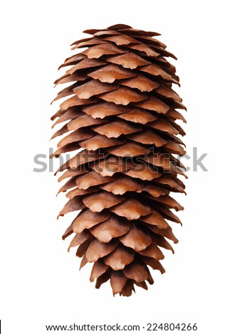 Pine tree cone isolated on white. Christmas decoration. - stock photo