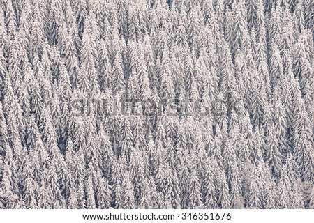 Pine tree forest covered with fresh soft snow. Winter in the Carpathian mountains - stock photo
